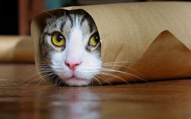 Recopilatorio de vídeos graciosos de gatos de youtube